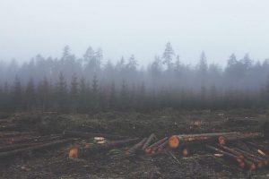 Predvsem imajo lesni peleti cenik ugoden zato, ker nastanejo kot stranski produkt gozdarskih opravil
